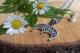 Оберег Звезда Лады в Луннице с чернением