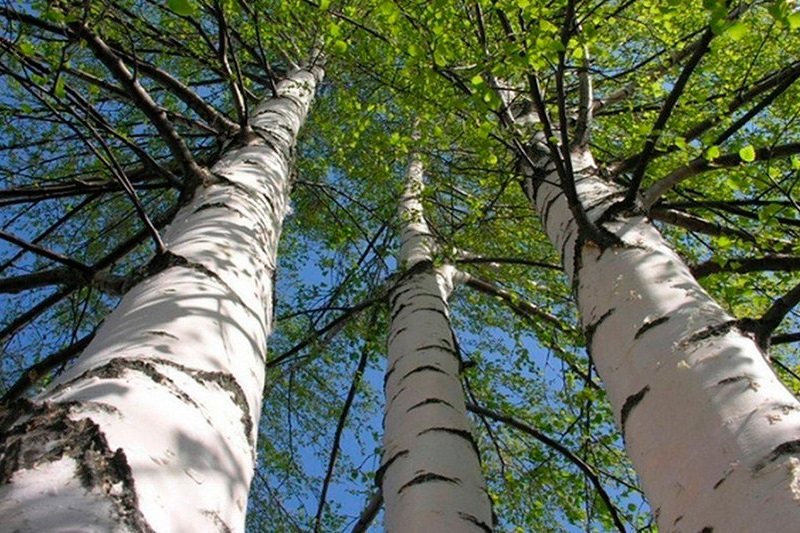 Примет которые связаны с деревьями